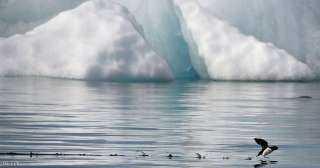 """بحث يحذر من """"الآثار الكارثية"""" لتراجع الجليد بالقطب الشمالي"""